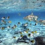 Fonds marins Polynésie