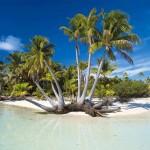 Cocotier en Polynésie